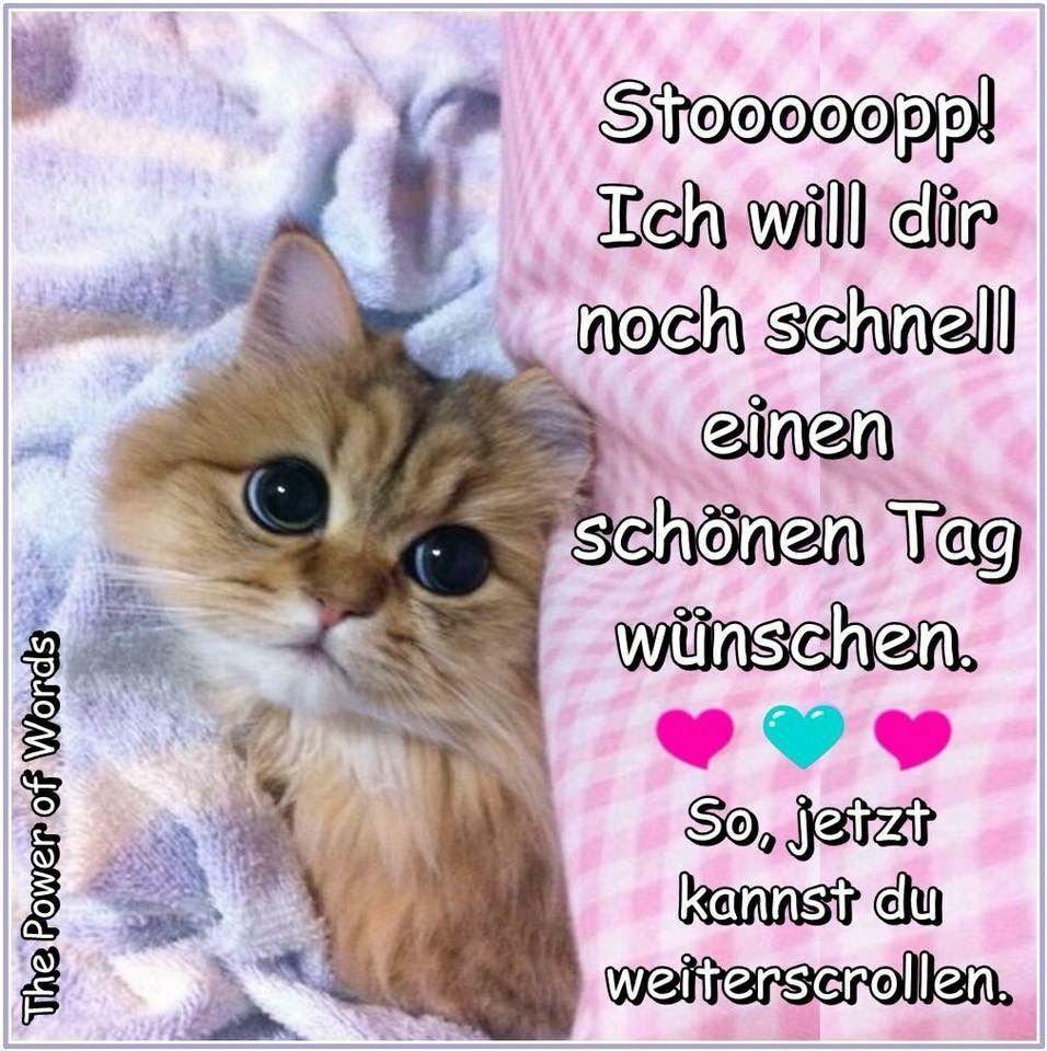 Pin Von Simone Friedrich Auf Guten Morgen Good Morning