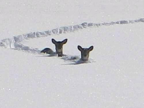 Spring is nearly here. One can already see Roe deer on the meadows.   via Torben Schmidt