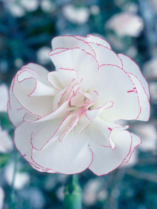 Plant Guide: Short Plants for Sun   Blüten, Blumen und Landliebe