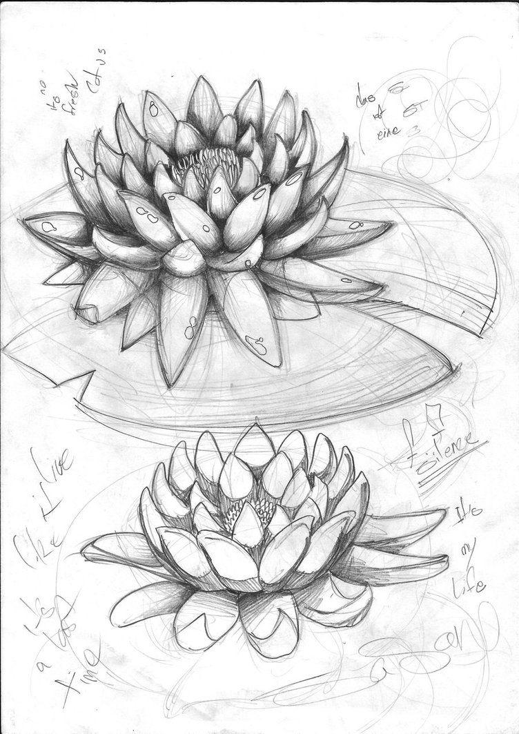 lotus sketch by sasanghods on deviantART Bocetos de
