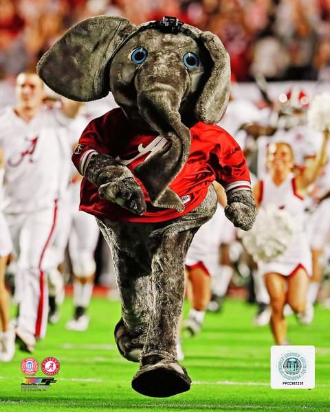 Alabama Crimson Tide Mascot With Images Crimson Tide Mascot
