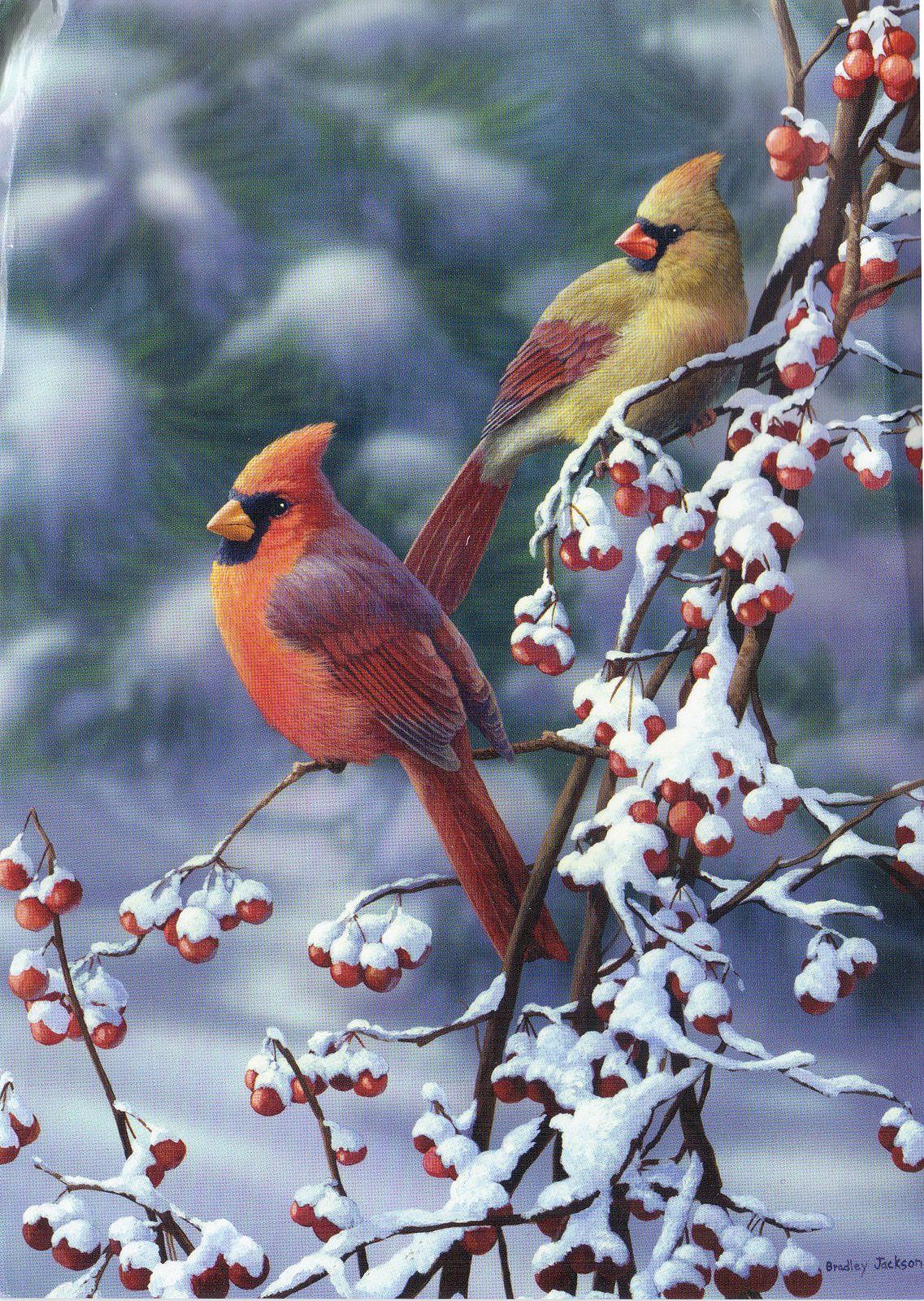 Christmas card usa beautiful birds winter scene