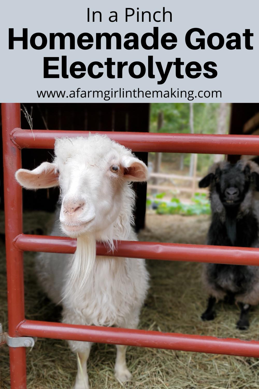 Homemade Goat Electrolyte In 2020 Goats Goat Care Raising Rabbits