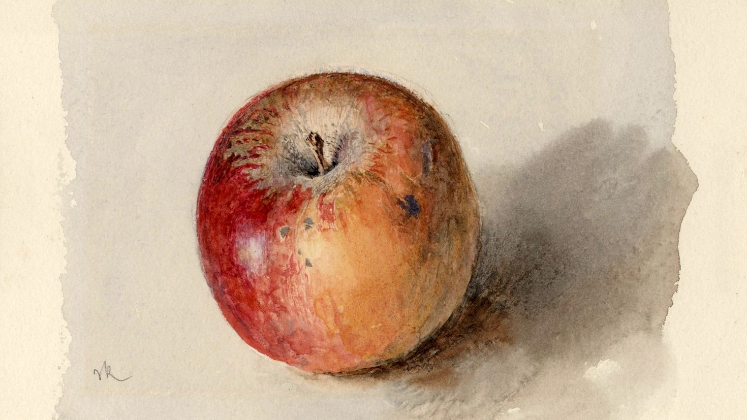 Blenheim Orange Apple C 1873 Watercolour And Bodycolour On