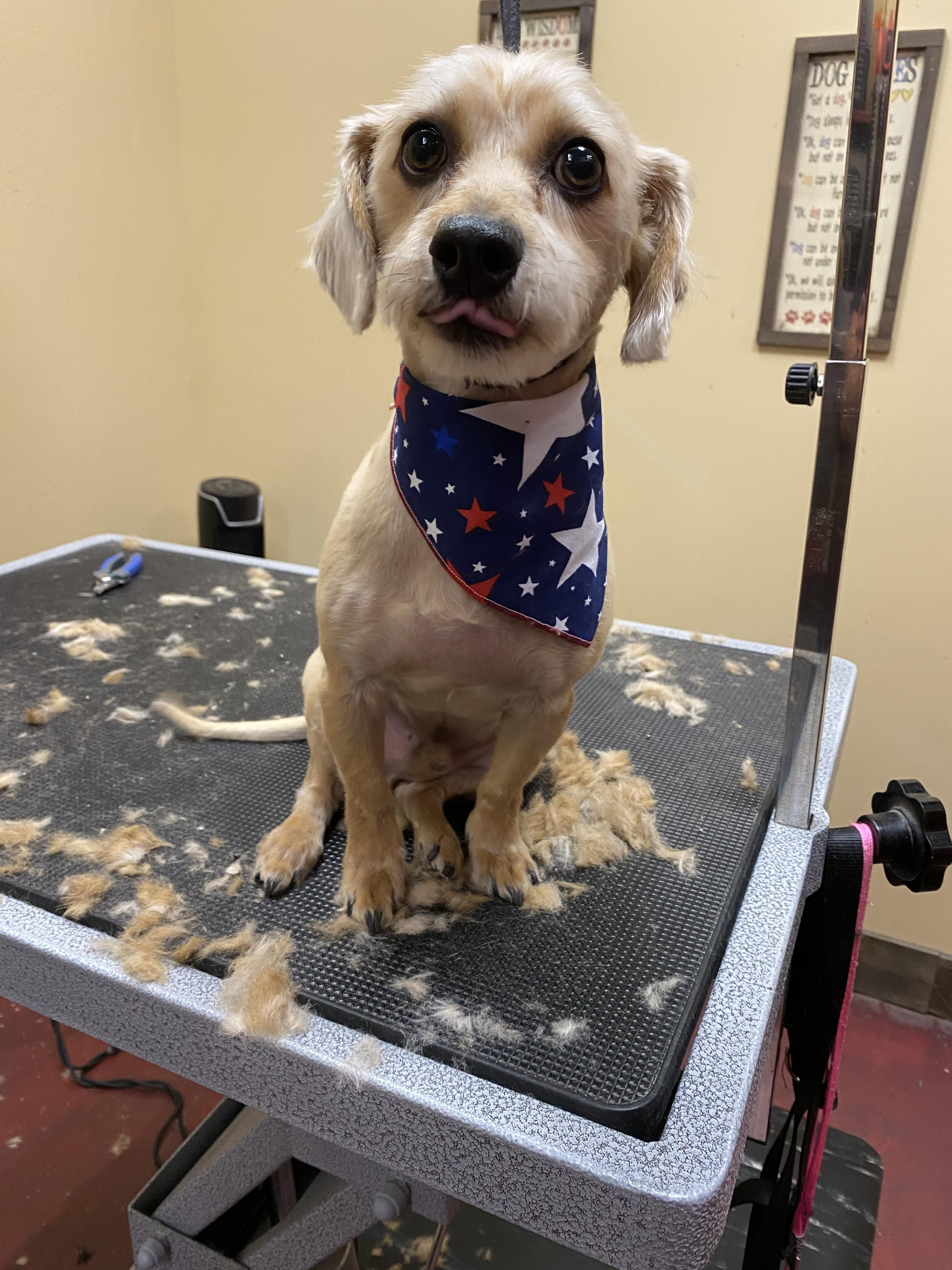 Pin On Healthy Pets Grooming