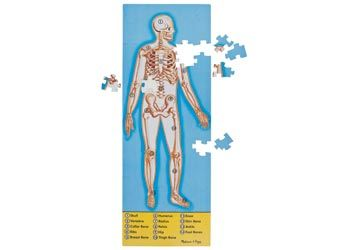 Human Body Floor Puzzle 100pc A Double Sided Floor Puzzle Displaying The Human Skeleton On One Side And The Internal Organ Human Body Human The Incredibles