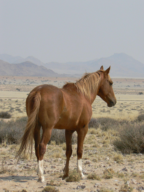 The Wild Horses of Namibia Wild horses, Horses