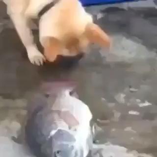 Photo of Schauen Sie sich diesen Hund an, der versucht, einen Fisch zu retten!