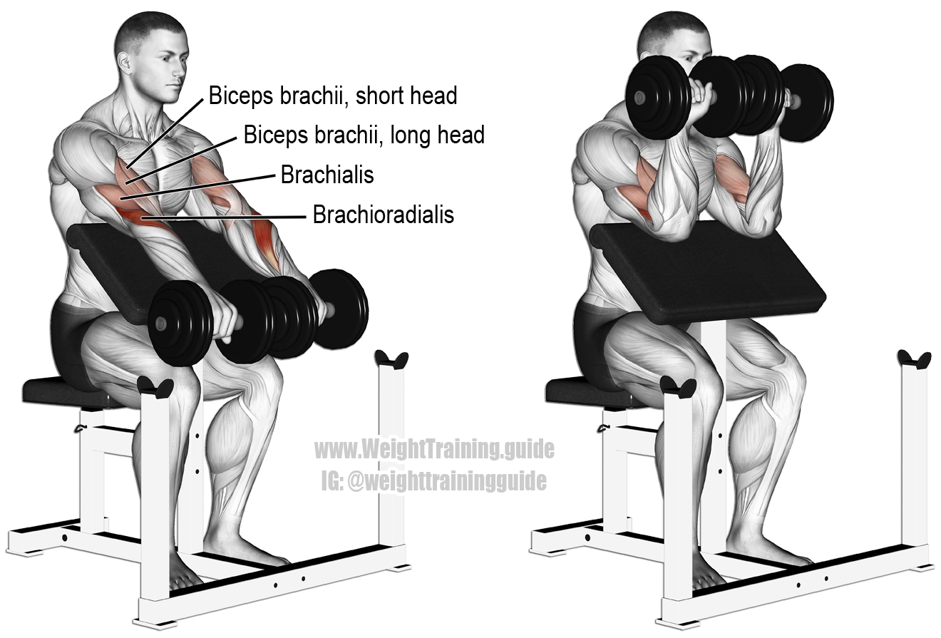 Image result for preacher curl