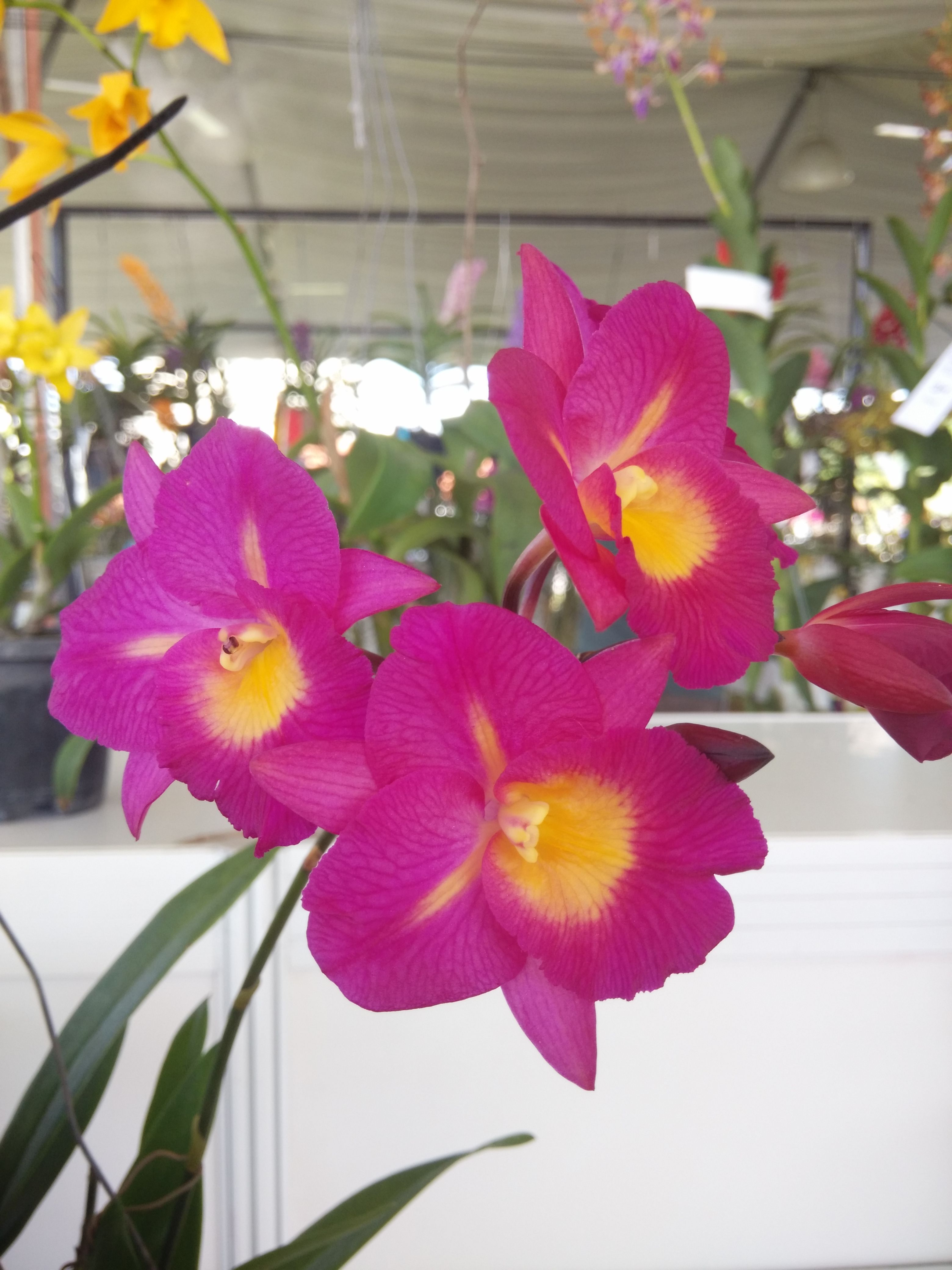 Pin by law ching on orchids pinterest orchid