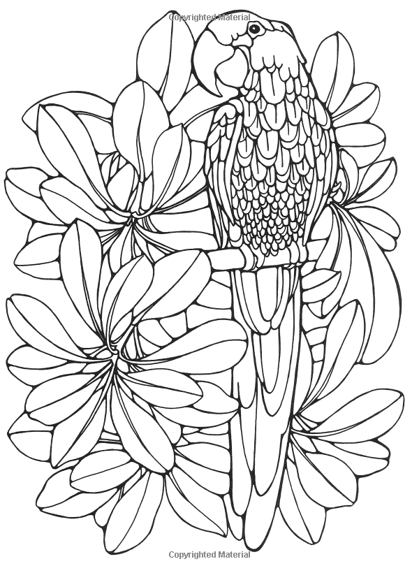 Designs for Coloring Birds Ruth