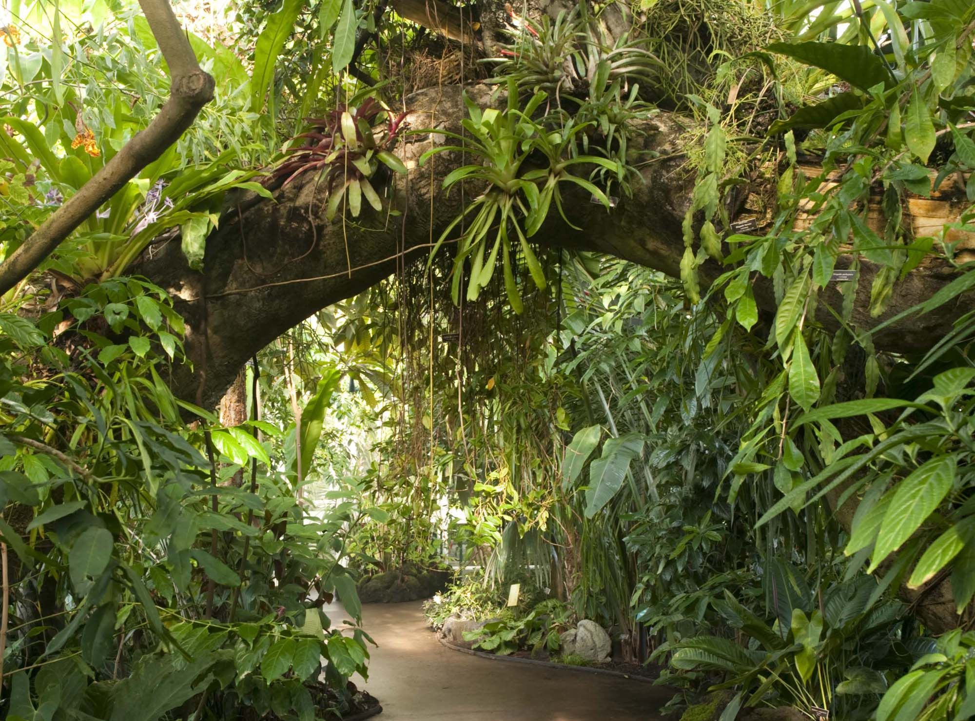 amazon rainforest facts - HD2000×1479