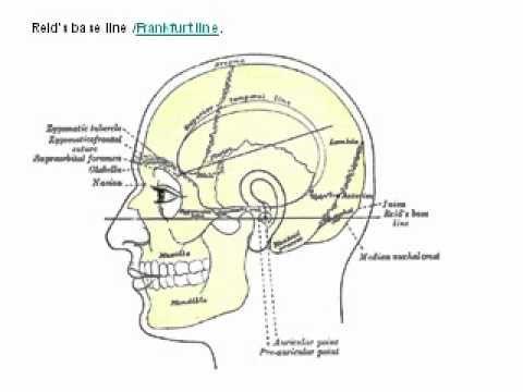 Surface Landmarks Of The Head And Neckflv Anatomy Videos