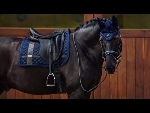 Sad Song || Dressage and Jumping Music Video || - YouTube
