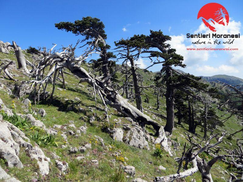 Sono molto affezionato alla Serra delle Ciavole perché questa montagna è bella per ciò che sento, per ciò che suscita dentro di me che per la sua estetica. www.sentierimoranesi.com