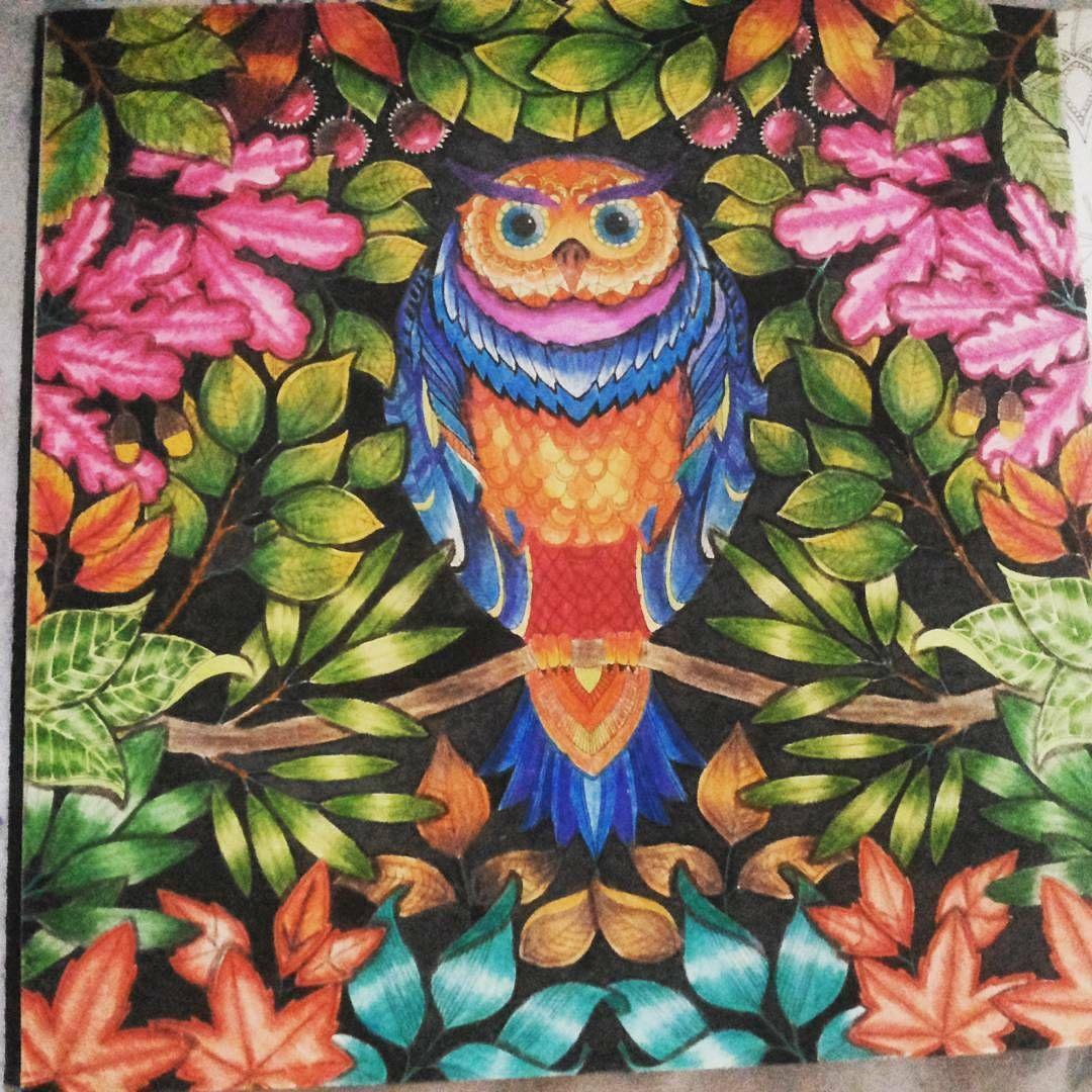 #sessãocoruja #linda use #colorindolivrostop #goodnight #boanoite @Regrann from @gizzanussa02 -  #coloringbook #colorindolivrostop #johannabasford #amocolorir #livrodecolorir #livroantiinsônia #jardimsecreto #florestaencantada #Regrann