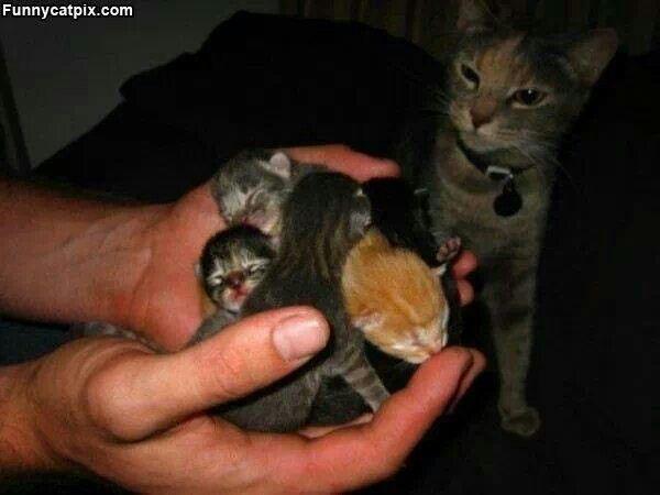 Precious New Born Kitties Baby Kittens Newborn Kittens Kittens