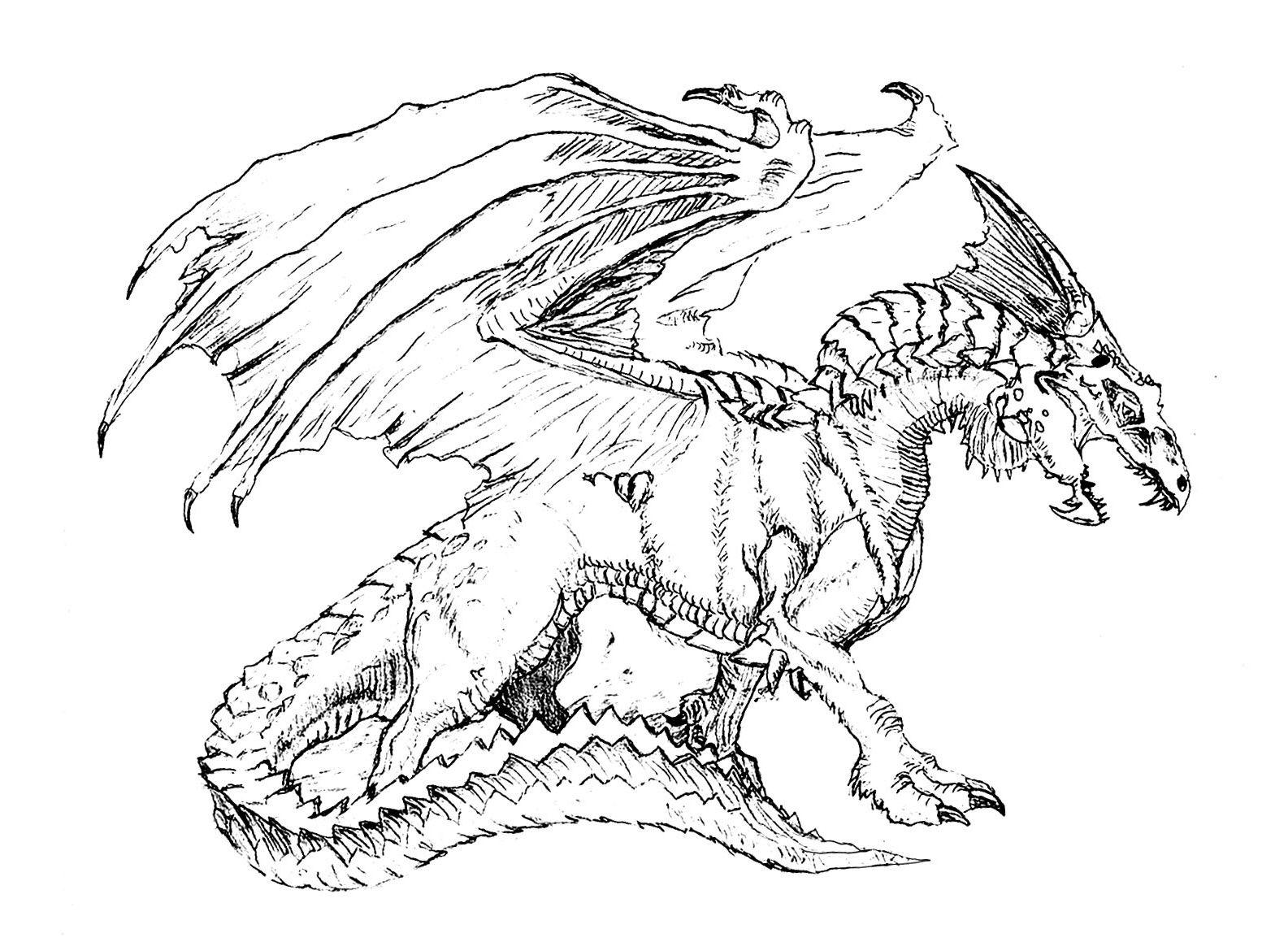 Coloriage Dragon A Imprimer