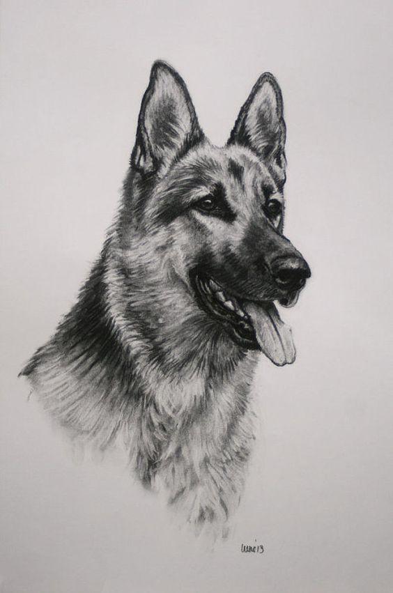 Image Result For Pastor Aleman Dibujo A Lapiz Arte Sobre Perros Dibujos De Perros Dibujo De Perro