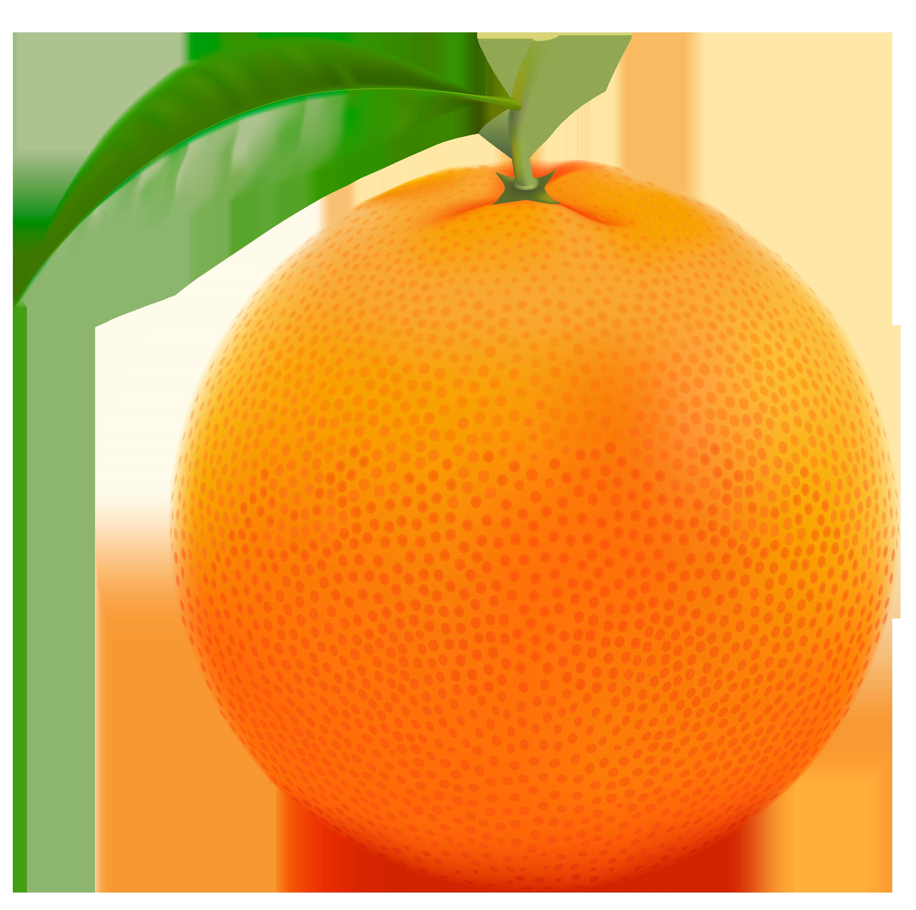 Red Orange Png Vector Clipart Image Png 3200 3180 Fruit Clipart Fruit Orange