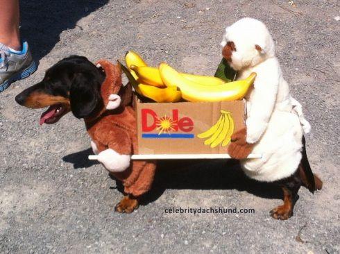Pet Halloween Costume Dog And Monkey Carrying Box Of Bananas