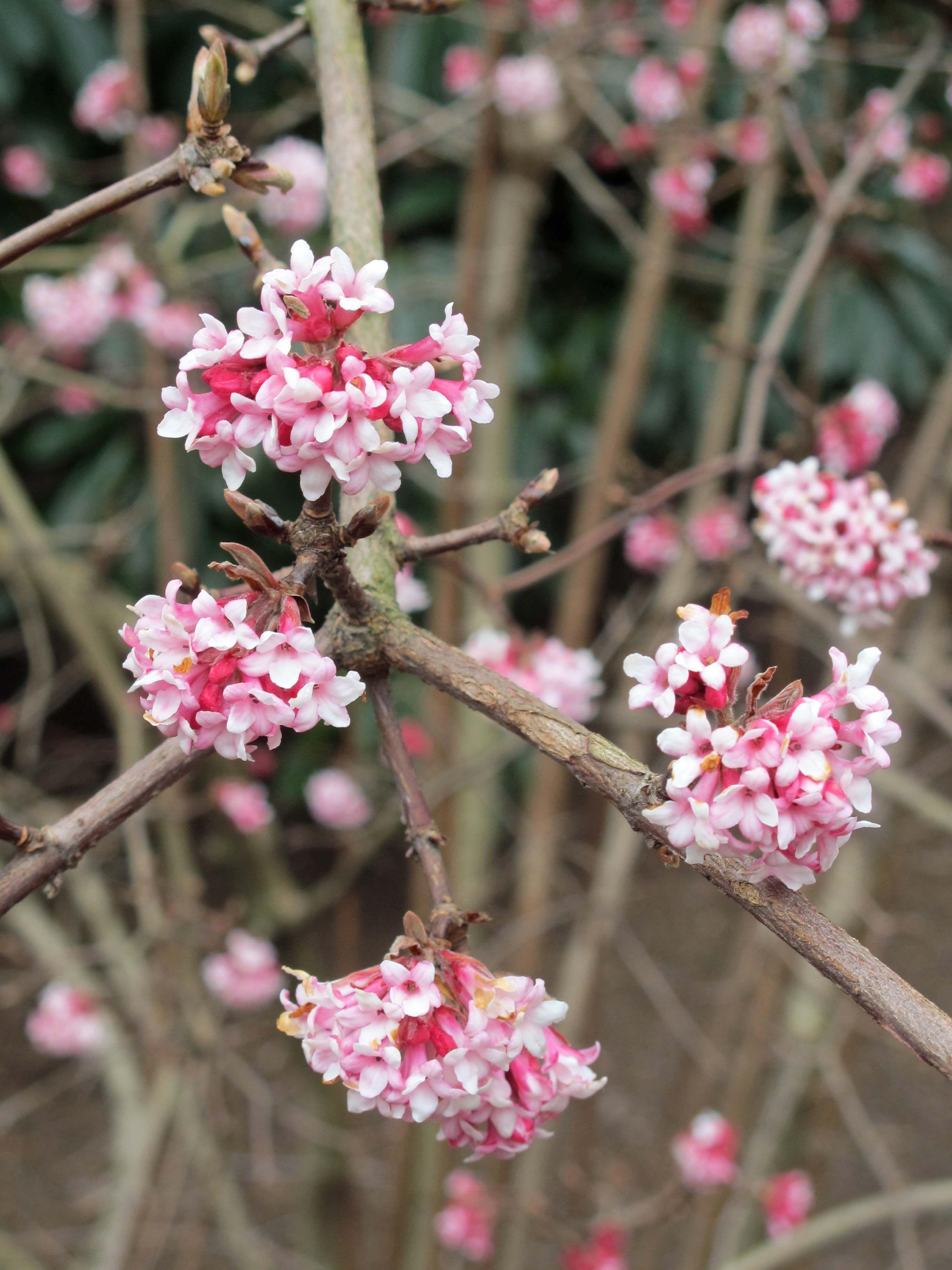 Late Winter Plants in glorious bloom! Winter plants
