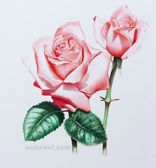 25 Beautiful Rose Drawings And Paintings For Your Inspiration Tat