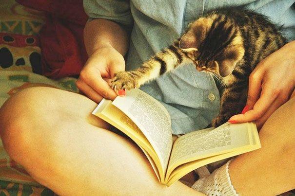 Gatos são animais lindos, charmosos e super carinhosos. Eles adoram carinho e a companhia das pessoas da casa, e não dispensam um pouco de atenção (pelo menos...)