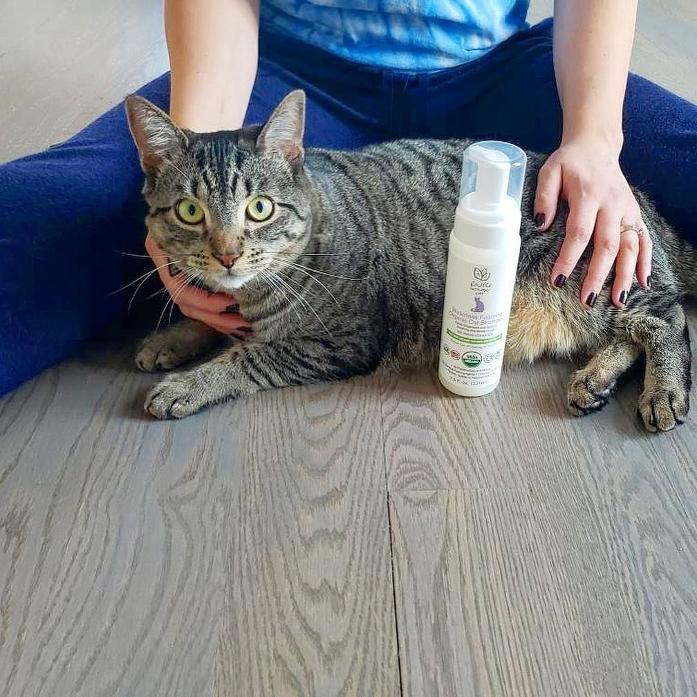 Hermiajesty Waterless Foaming Organic Cat Shampoo Waterless Shampoo Cat Shampoo Beauty Secrets
