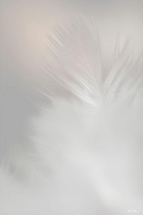 Feathery White Fond Ecran Blanc Tout Blanc Jeux De Couleurs