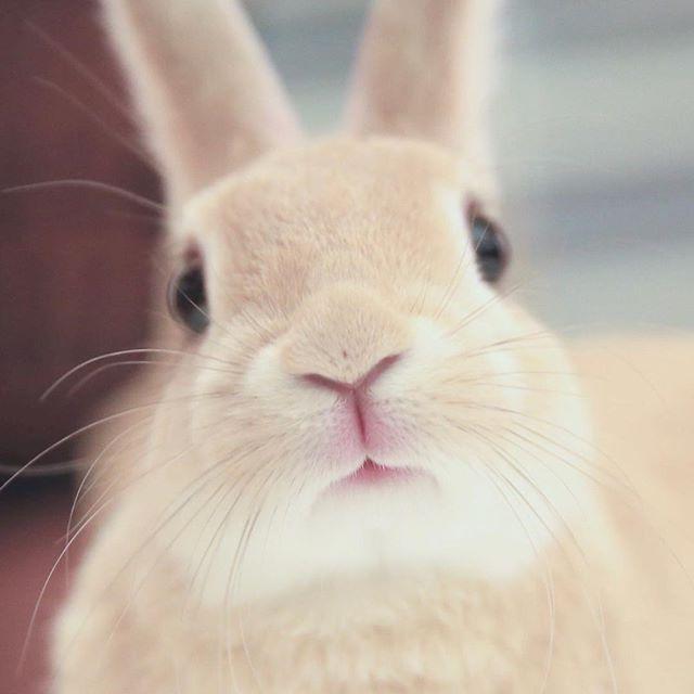 Pinterest Pmooose ペット 動物 かわいい 可愛い 動物