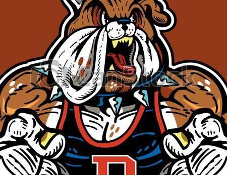 Bulldog muscular. Vector of mascot design