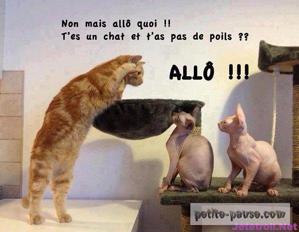 Les Chats Les Plus Droles Du Net Photo Drole Animaux Animaux Droles Image Drole Animaux