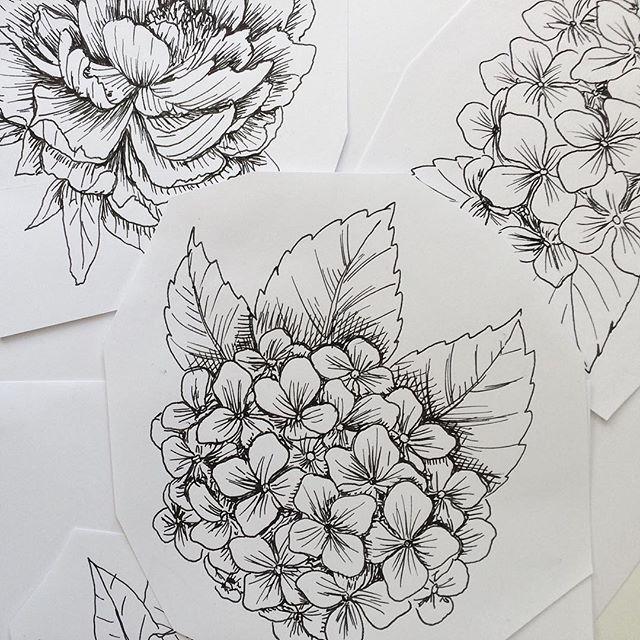 Details Of The Latest Illustrations Peonies And Hydrangeas Illustration Drawing Botanicalillustration Zeichnung Zeichnenlernen 366da Tattoos Hydra