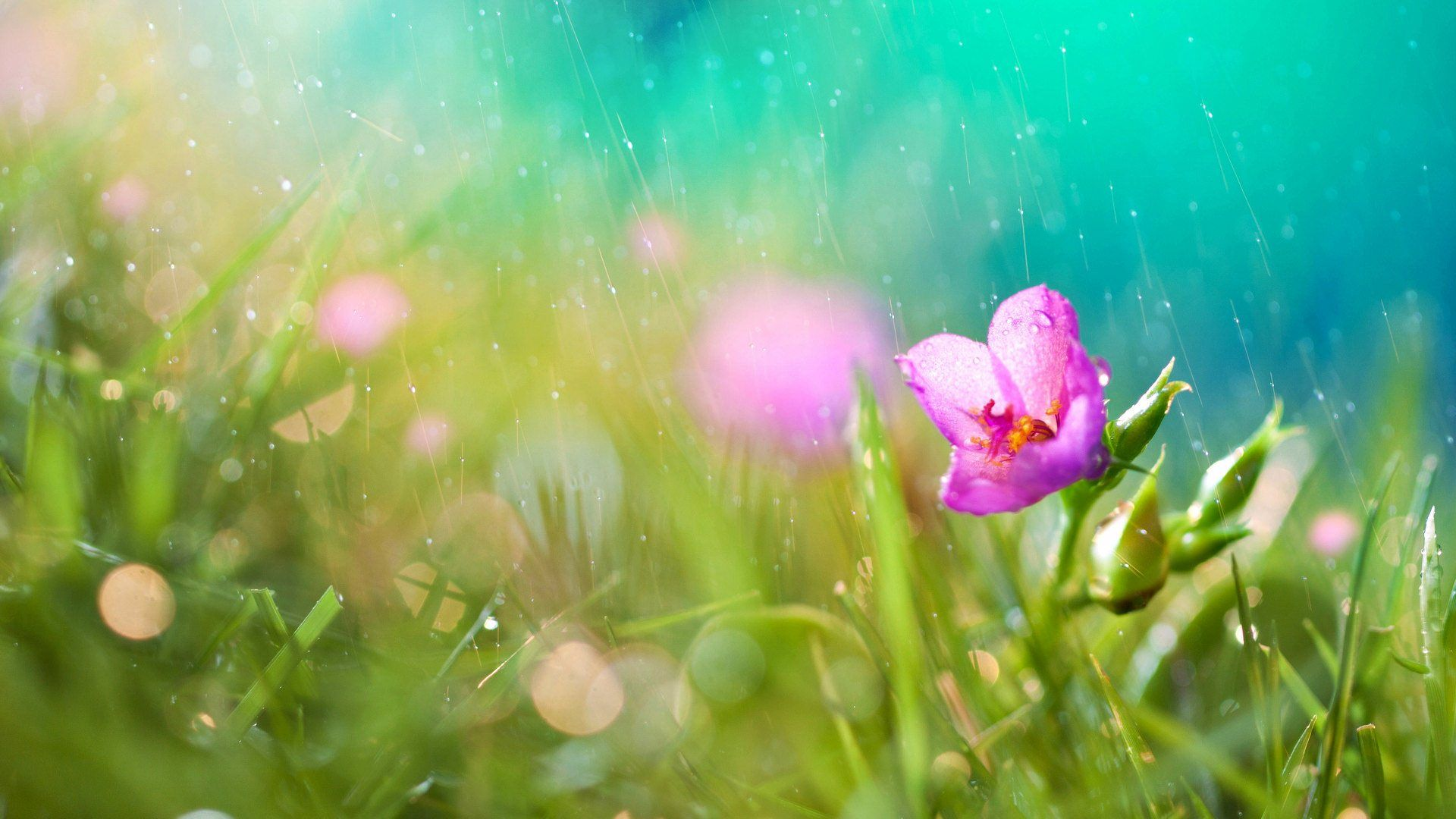 hd spring rains wallpaper - photo #13