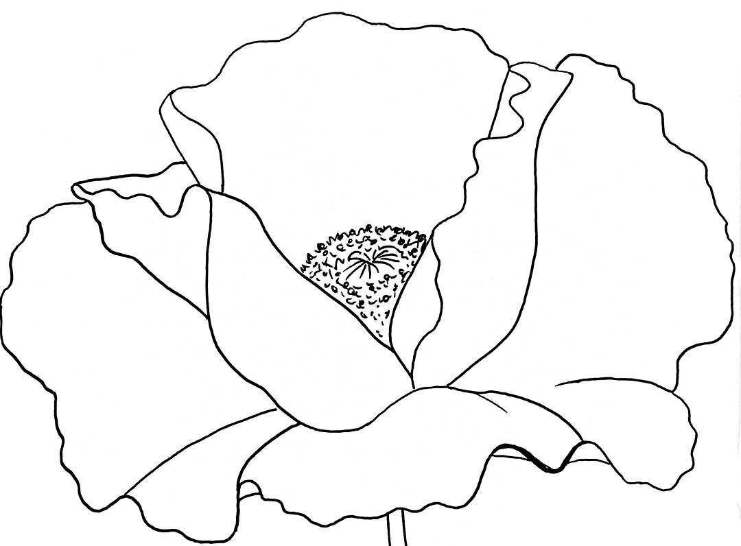Poppy Traceable Angelafineart Pinteres Within Flower Templates ...