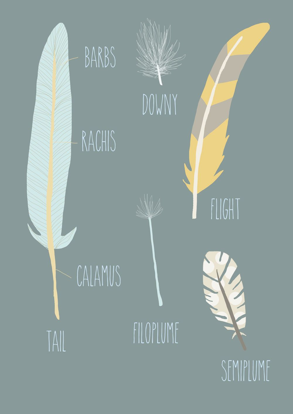 Feathers - Giclee Print