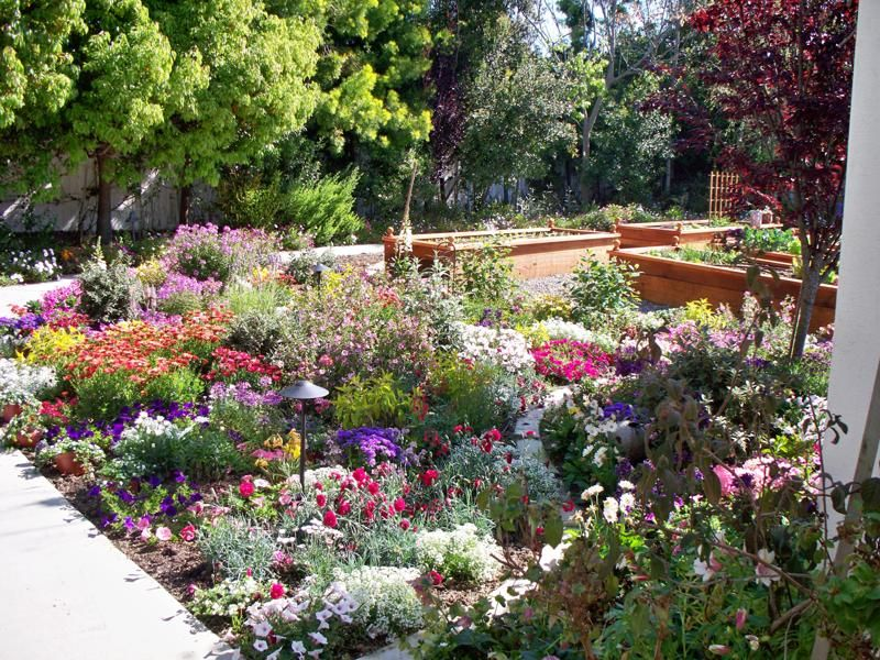 Southern california gardens yard remodel ideas for Southern california landscaping ideas
