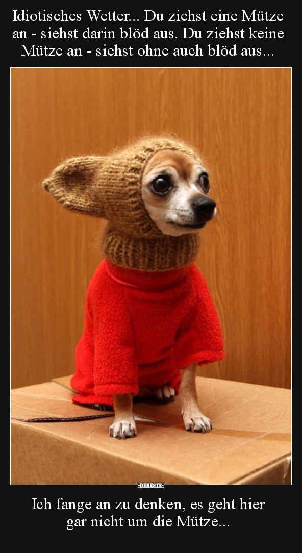 keinen bh pullover welpen