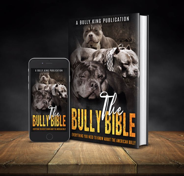 Everything You Need To Know About The American Bully Breed ...