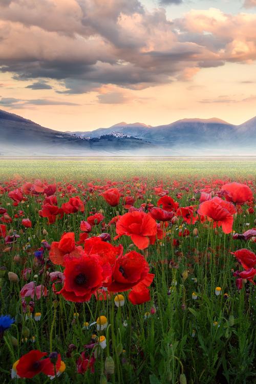 gdr1:  expressions-of-nature:  Land Of Dreams by: alematrix  Creme d' la' Creme