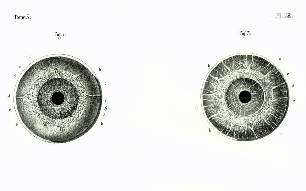 1844 Anatomie microscopique de l\'oeil, Iris de l\'oeil, globe ...
