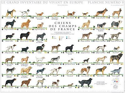 Dog Breeds | Agricultural biodiversity | Pinterest | Pets, Photos ...