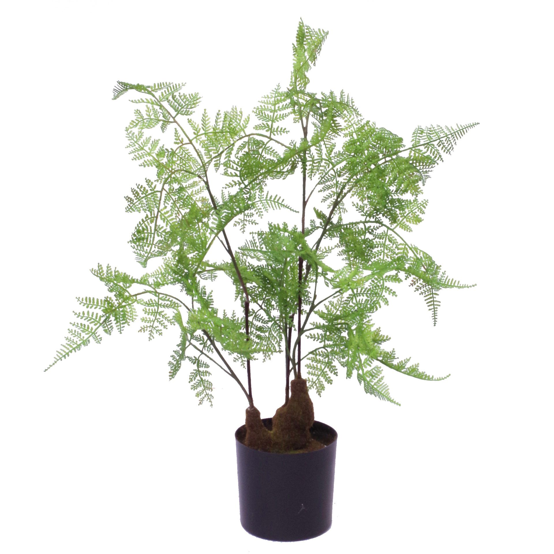 Price: £34.99 60cm Artificial Natural Moss Base Fern Foliage Plant Leaf Artificial Plants This artificial moss base natural fern plant measures 60cm tall x 40cm x 40cm when arranged as we have it in our pictures. Comes fully potted in a plastic pot, ready to display (planter measures 12cm wide x 11cm tall). Fully wired stems ready to be arranged to fit your space perfectly. Pot material: Plastic. Leaves: Plastic. #ArtificialPlants