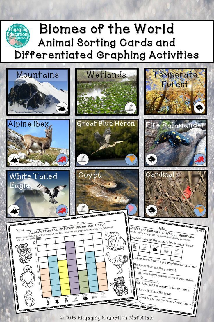 Biomes Of The World Animal Sorting Cards And Graphing Activities Graphing Activities Biomes Sorting Cards [ 1104 x 736 Pixel ]