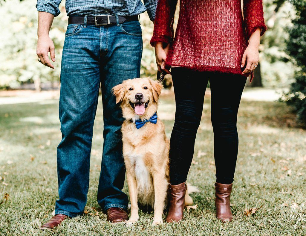 Royal Blue Dog Bow Tie Collar, Pet Wedding Accessory