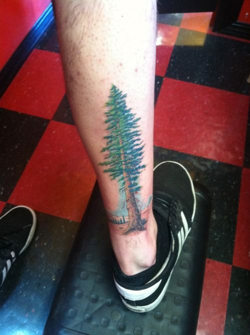Tattoo of a redwood tree done by tivon creager at true for True culture tattoos