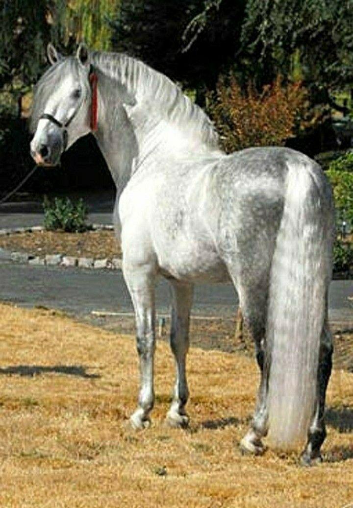 Пин на доске Красивые лошади