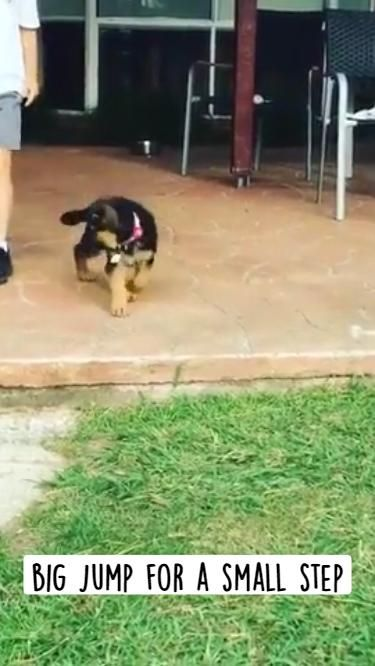 big jump for a small step
