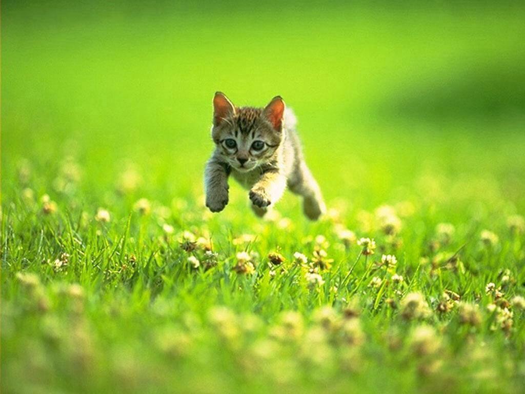 Look How High I Can Jump Cats Kitten Kittens Cutest